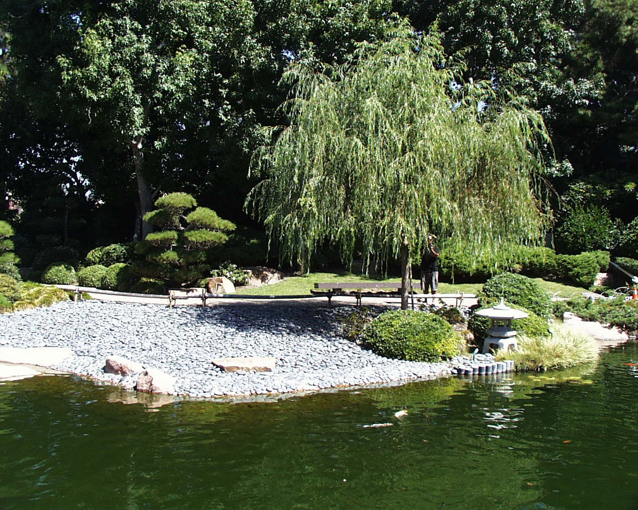 CSU Long Beach - Earl Burns Miller Japanese Garden & Koi Pond